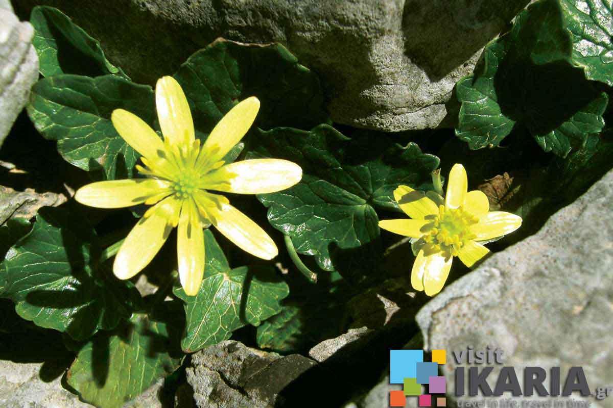 Flora Amp Fauna Visit Ikaria