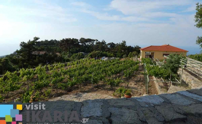 afianes_winery2