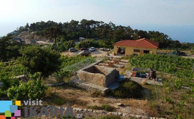 afianes_winery3