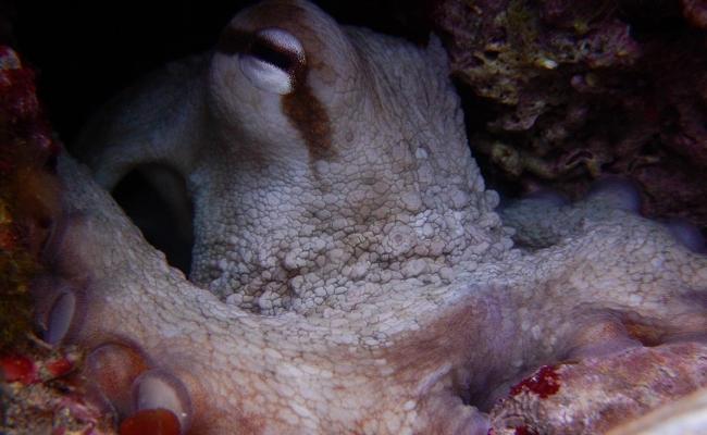 ikaria_diving_center07