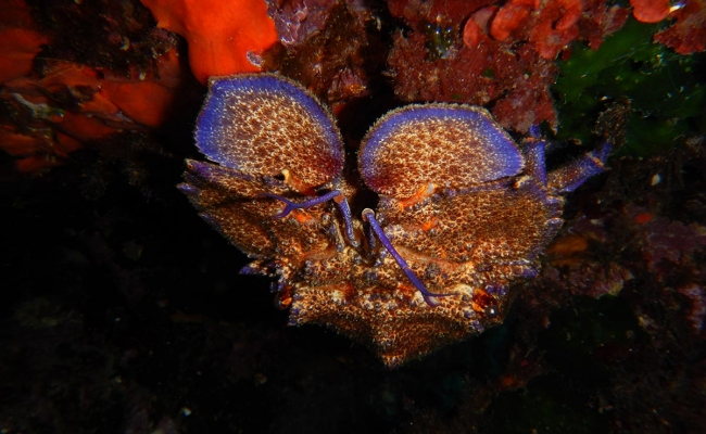 ikaria_diving_center10