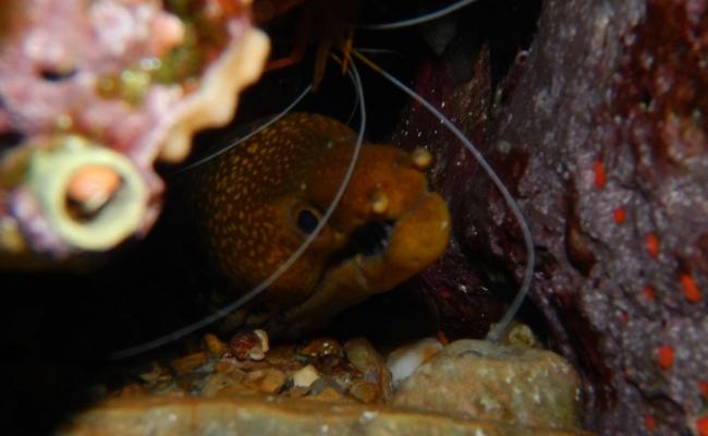 ikaria_diving_center14