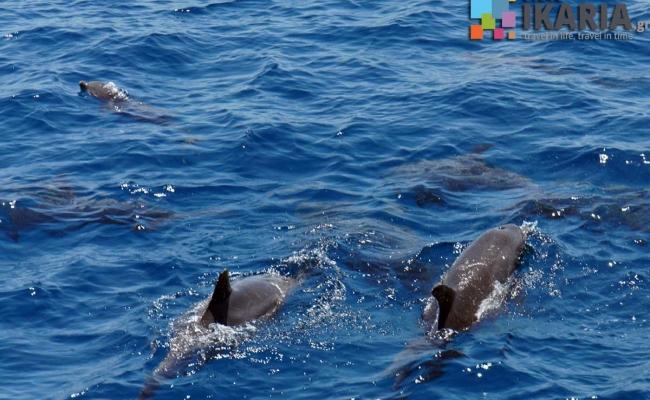 ikaria_fauna_dolphins