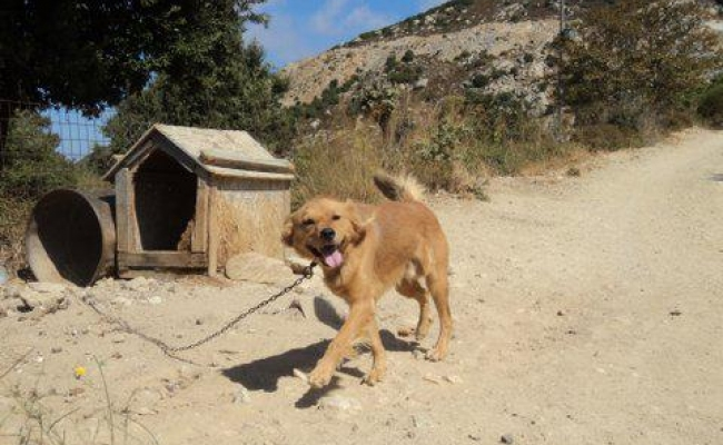 barrel-dog-ikaria