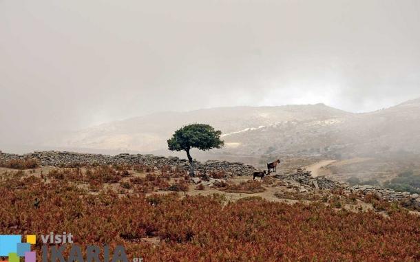 laggada-village-ikaria